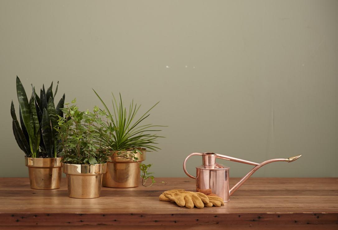 Plant005