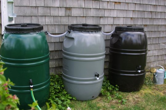 60 Gallon Rain Barrel. Wayfair Photo